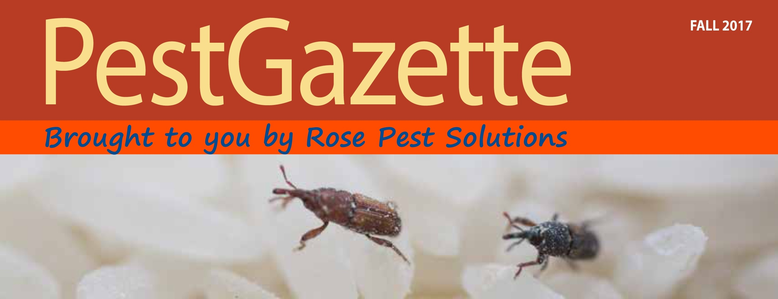 Download Rose Pest Solutions Fall 2017 Pest Gazette