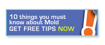 10 things you must know about Mold. Get free tips now.