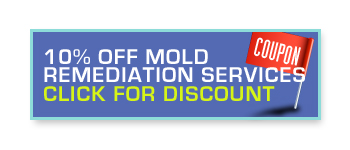 10% off mold remediation services. Click for discount.