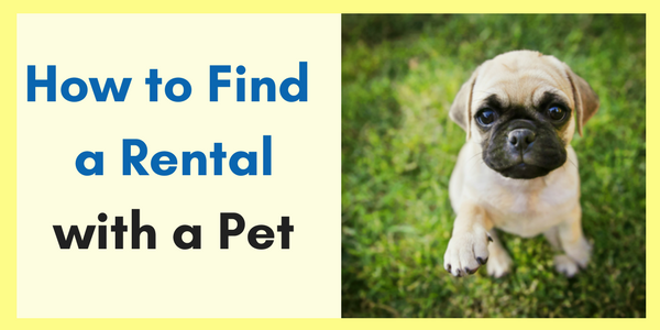 How to Find a Rental Home with a Pet