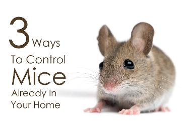 3 ways to control mice in your home