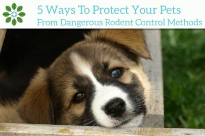 Nearly 7,000 Pets are Sickened Each Year From Rodent Poison