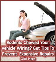 Rodents find new car wiring tasty