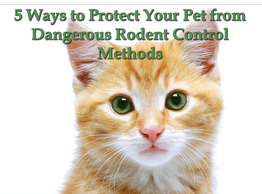 5 Ways to Protect Your Pet from Dangerous Rodent Control Methods