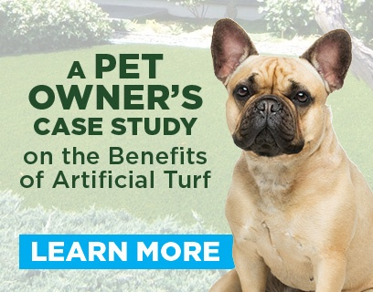 Pet Owners Case Study