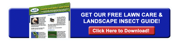Lawn Care & Landscape Insect Guide