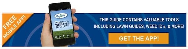 Download Our Mobile Phone App!