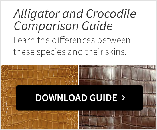 Alligator and Crocodile Comparison Guide
