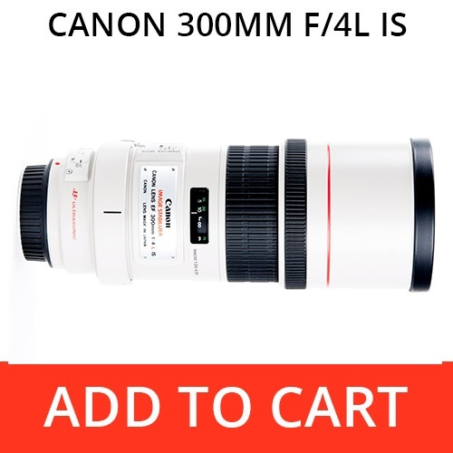 Rent a Canon 300 f/4L IS