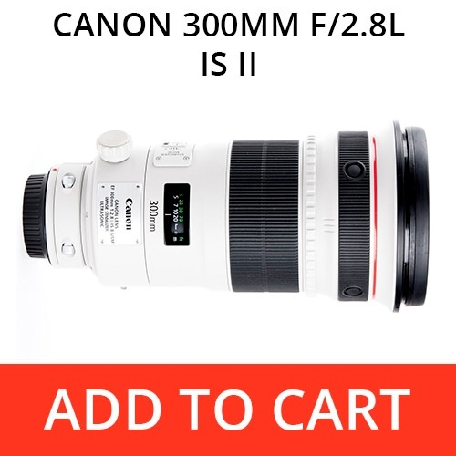 Rent a Canon 300 f/2.8L IS II