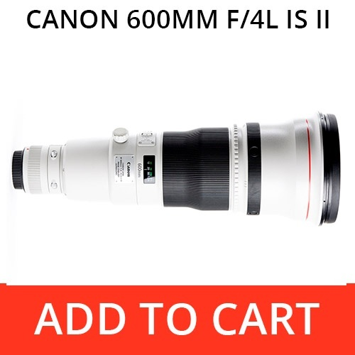 Rent a Canon 600 f/4L IS II