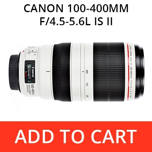 Rent a Canon 100-400 f4-5.6L IS II