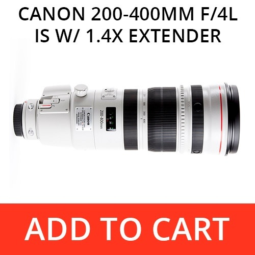 Rent a Canon 200-400 f/4L IS