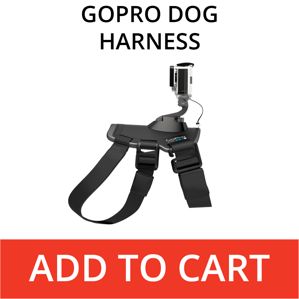Rent A GoPro Dog Harness