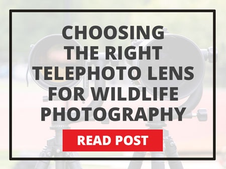 Choosing the right telephoto lens for wildlife photography