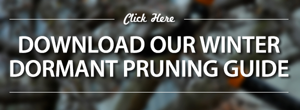 Download Our Dormant Pruning Guide