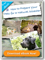 How to Prepare Your Pets for a Natural Disaster Stevens Veterinary