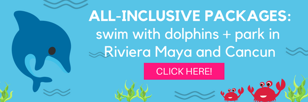Swim with dolphins + park in Riviera Maya and Cancun