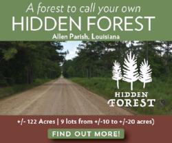 Hidden Forest Land for Sale in Allen Parish Louisiana