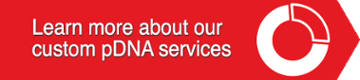 Learn about our custom pDNA services