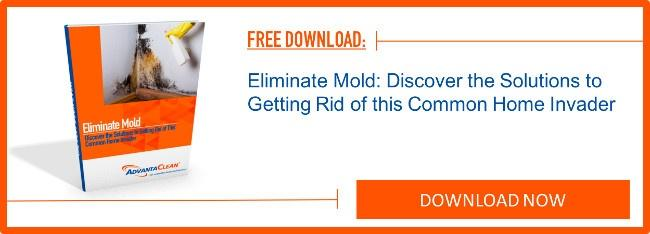 eliminate-mold-discover-the-solutions-to-getting-rid-of-this-common-home-invader