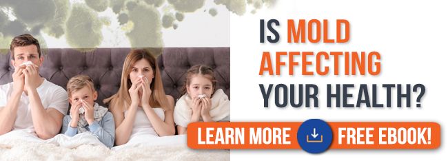 Is Mold Affecting Your Health 2020