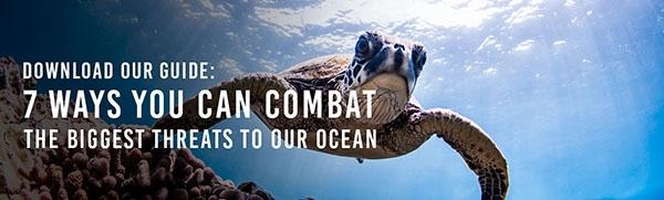 Download our guide: 7 Ways You Can Combat The Biggest Threats To Our Ocean