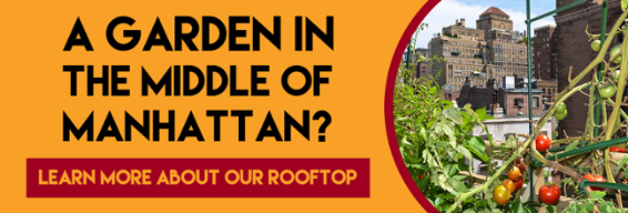 A garden in the middle of Manhattan? Learn More About Our Rooftop Garden!