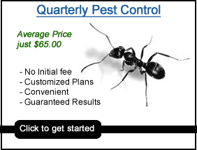 pest control Raeford nc, quarterly pest control Raeford