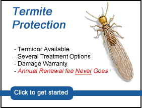termites, termite protection contract
