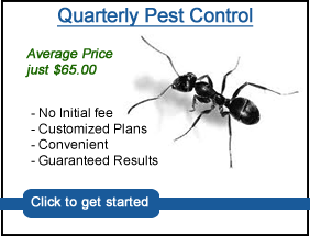 Quarterly pest control service