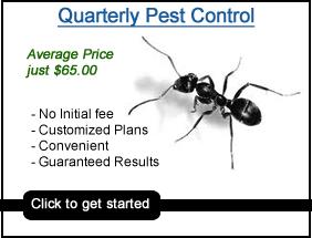 pest control garner nc, quarterly pest control garner