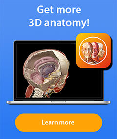 Visible Body's 3D Anatomy Apps