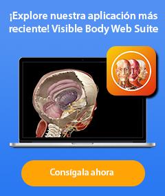Visible Body Web Suite - Explore nuestra aplicación más reciente