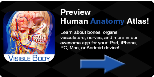 Visible body, 3D body, 3D anatomy