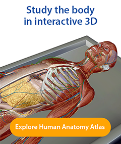 Study in interactive 3d with Visible Body's Human Anatomy Atlas