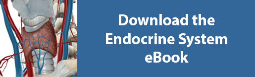 scarica l'ebook sul sistema endocrino