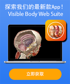 Visible Body Web Suite - 探索我们的最新款App