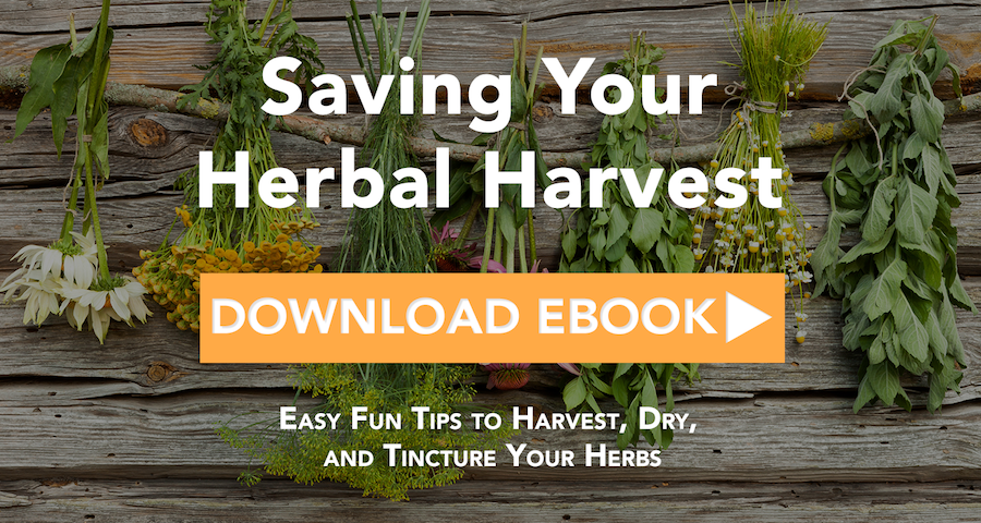 Free Saving Your Herbal Harvest eBook