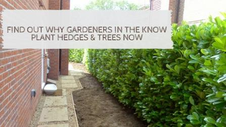 Find out why gardeners in the know, plant hedges & trees now