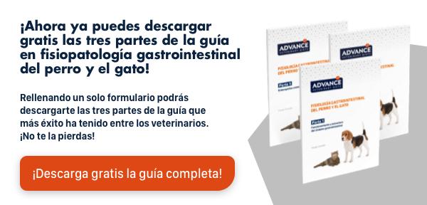 Descarga el informe:Leishmaniosis canina