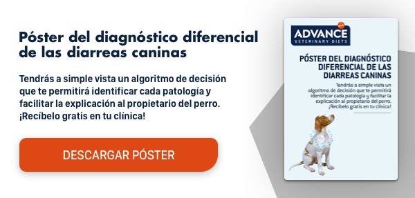 poster diagnostico diferencial diarreas caninas Vets Affinity