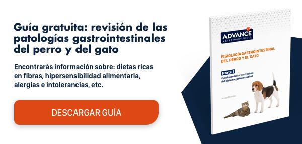 fisiopatología gastrointestinal: estructura y funcionamiento