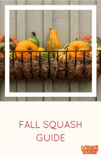 Fall squash guide