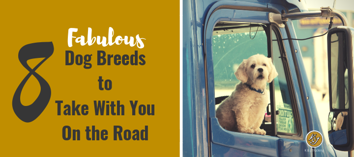 8 Fabulous Dog Breeds to Take with You On the Road - K&J Trucking