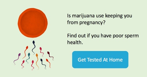 marijuana harms sperm