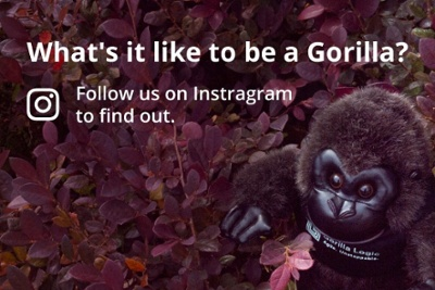GorillaLogic_Instagram