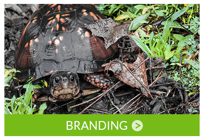 Get the Attention Your Business Deserves with a Great Brand!