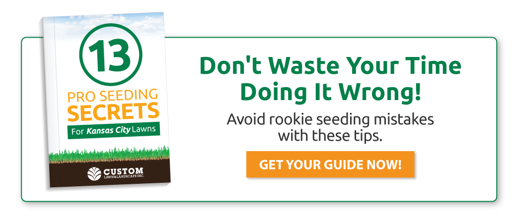 Don't waste your time doing it wrong! Avoid rookie seeding mistakes with these tips.