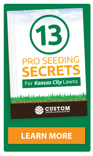 13 Pro Seeding Secrets for Kansas City Lawns